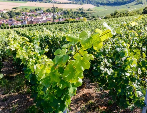 Champagnestreek Frankrijk