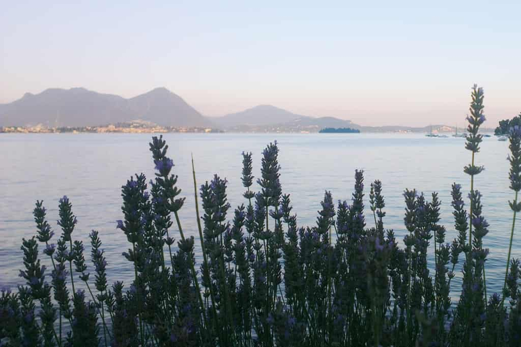 Feriolo, Italië - mamaliefde