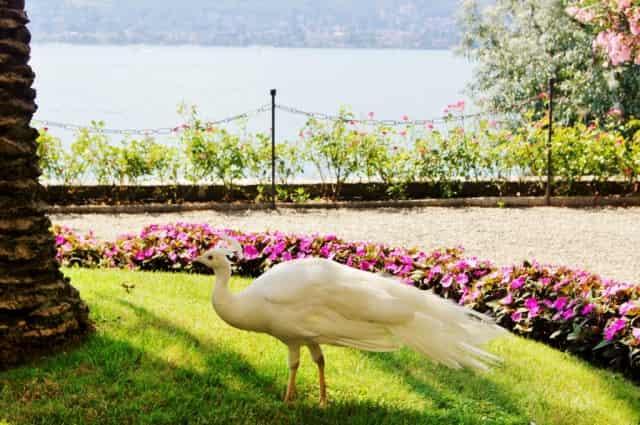 Isola Madre, Italië - mamaliefde