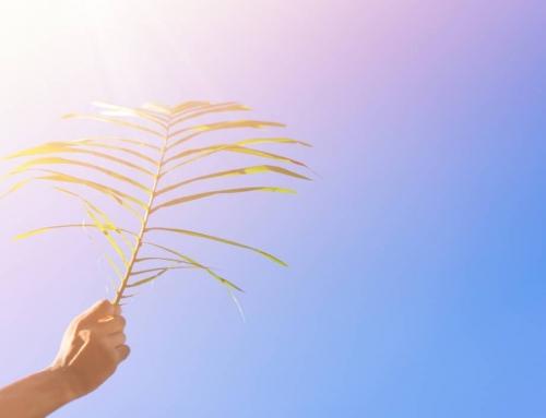 Palmpaasstokken maken & betekenis Palmpasen