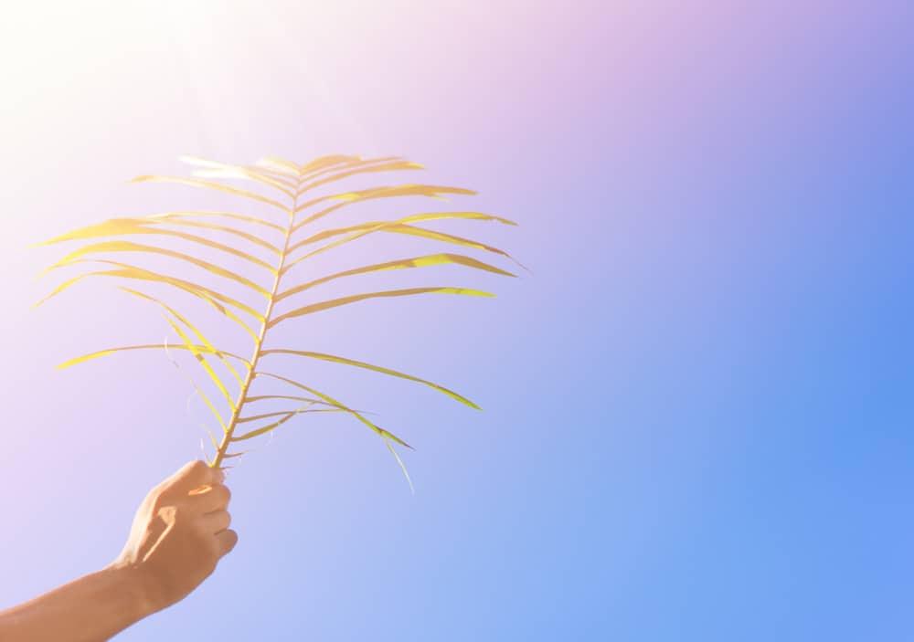 Palmpaastokken maken voor palmpasenoptocht & betekenis wat is Palmpasen? - Mamaliefde.nl