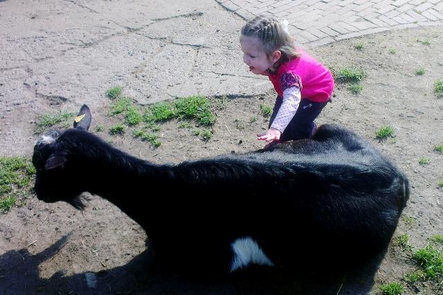 Kinderboerderij - mamaliefde