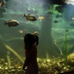 Dagje Dierentuin Dierenpark Emmen en Yucatan - Mamaliefde