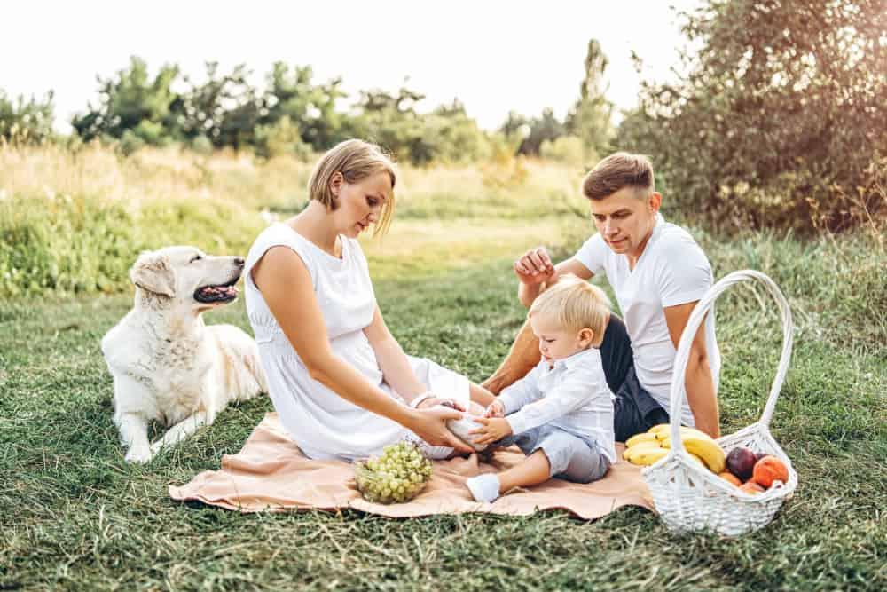 Picknick ideeën met kinderen; hapjes en drankjes voor in de mand en ervaringen - Mamaliefde.nl