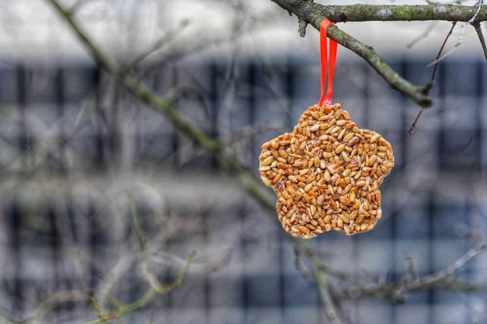 DIY: Vetbollen voor de vogels maken - Mamaliefde.nl
