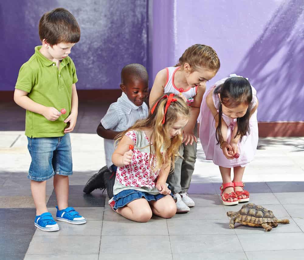 Spelend leren met dieren - Mamaliefde.nl