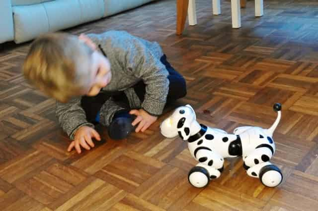 review zoomer dalmatier - Mamaliefde