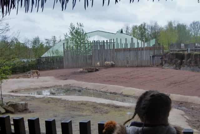 Dagje uit: gaia zoo kerkrade - Mamaliefde.nl