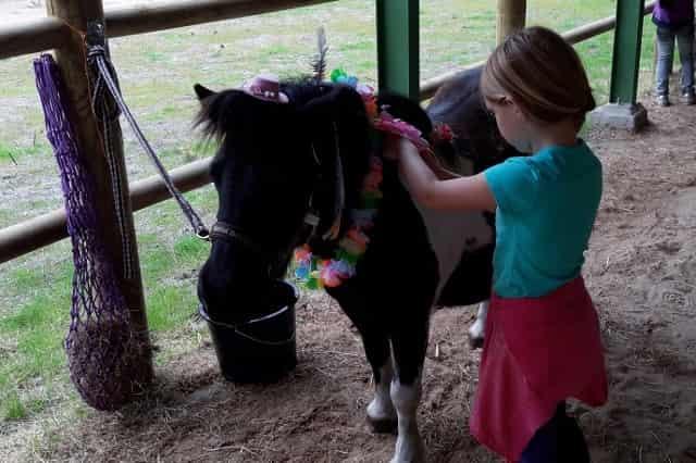 Ponyvakantie Sinds een aantal weken kun je bij Het Meerdal ook op Ponyvakantie. Ik wist niet echt wat ik me er bij moest voorstellen en besloot ook een beetje op zoek te gaan op internet. Zoals het op mij overkwam was het een bungalow met een pony erbij gedurende de dag van een uur of 10 tot een uur of 5 in de middag. Klinkt leuk natuurlijk, maar wat doe je dan de hele dag met zo`n beest voor je deur? Het bleek allemaal anders te zijn dan ik van tevoren verwacht had. Wij kwamen op vrijdag aan en op zaterdag start het ponyprogramma. Om half 10 verzamelt iedereen zich in de paddock waar een aantal begeleiders van het park je welkom heten. Vervolgens loop je samen naar de melkveehouderij aan de overkant van het park. Dit is ongeveer 10 minuutjes lopen. De pony`s staan daar allemaal in een prachtige grote wei en hebben ruimte genoeg. Vervolgens loop je met 'jouw' pony terug naar de paddock waar je uitleg krijgt over de verzorging. Je hangt een netje hooi en zet een emmer water klaar. Vervolgens kun je jouw pony gaan borstelen en kammen. Uiteraard mag je er, samen met papa of mama, op rijden zoveel als je wil. Van 12 tot 13 uur is het pauze. Je pony mag dan mee naar het huisje en kan even uitrusten terwijl de kinderen een broodje eten op het terras. Ondertussen moeten ze wel hun pony in de gaten houden. Onze pony Scotty schopte zijn emmer water nogal graag om, dus dan moet je aan de slag om die emmer weer te vullen. En wat er in gaat, moet er ook weer uit. Je kleine ruitertje mag dan ook de poep van de pony opruimen. Om 13 uur ga je weer aan de slag. Een beetje borstelen, een vlechtje maken, een rondje rijden. Het is eigenlijk aan jou. Rond half 3 ga je opruimen en breng je jouw pony terug naar het weiland en zijn vriendjes. Voor de kinderen een perfecte afsluiting van de dag, want ze hebben ook niet de neiging om nu steeds naar de paddock te lopen en weer met hun pony bezig te zijn. Het is afgesloten en er is nog voldoende tijd om andere dingen te doen met het gezin. Op
