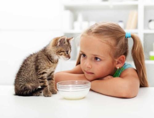 Huisdier voor kind; welke zijn leuk en goed te verzorgen?