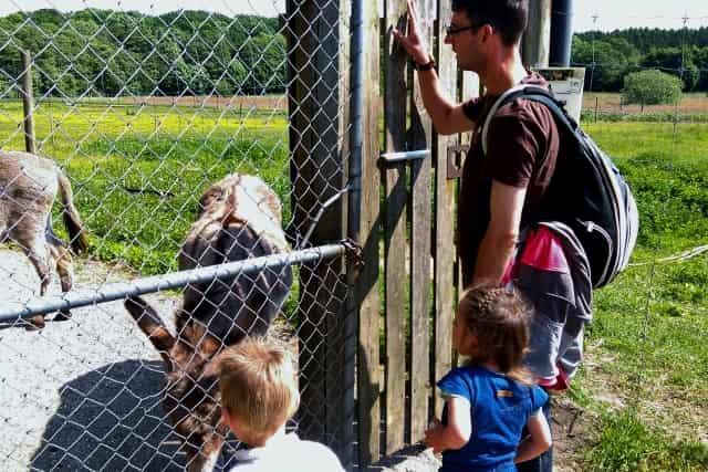 Ree Safaripark Ebeltoft Denemarken - Mamaliefde.nl