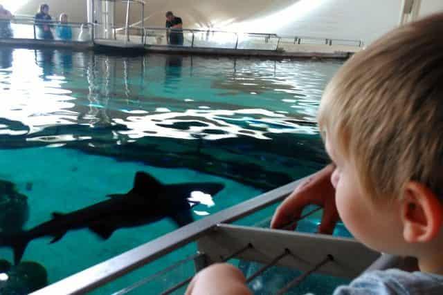 Dagje uit aquarium Kattegatcenter Grenaa - Mamaliefde.nl