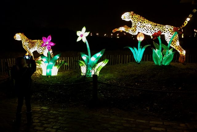 Africa by light - Safaripark Beekse Bergen - Mamaliefde.nl