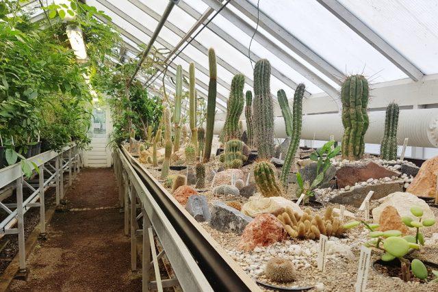 Botanische Tuin Delft : Uitjes delft met kinderen; wat is er te doen aan activiteiten met