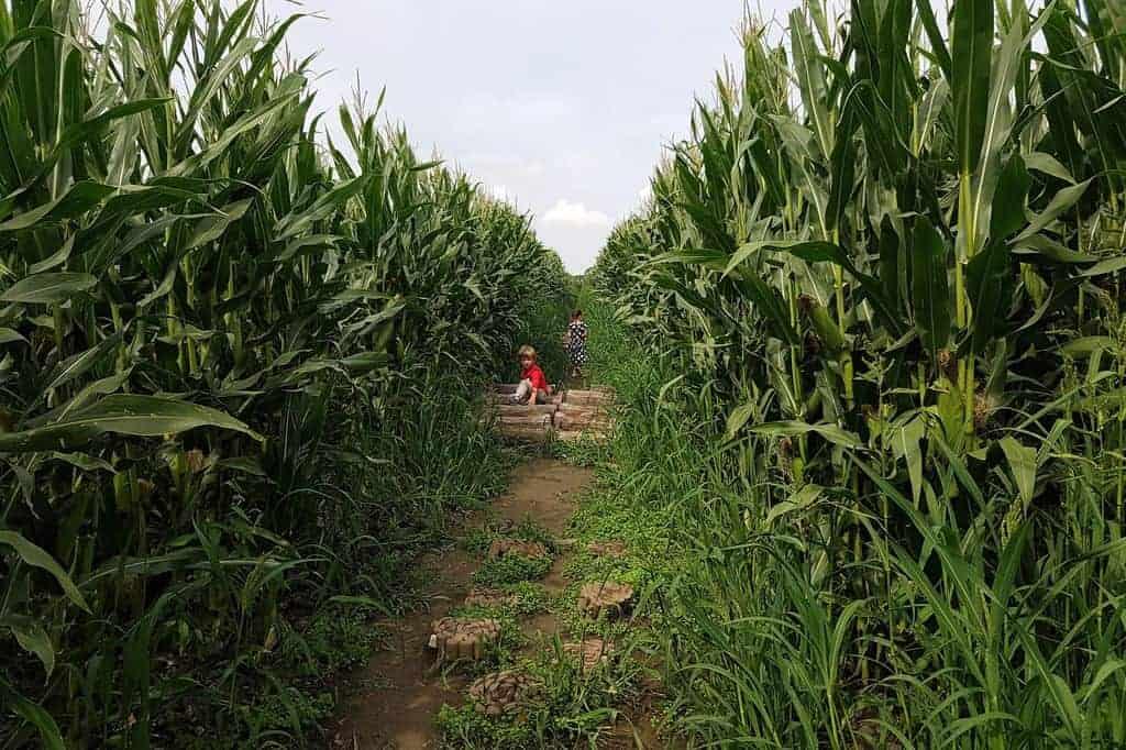 Dagje uit; verdwalen door een maïsdoolhof bij Hoeve Bouwlust - Mamaliefde.nl