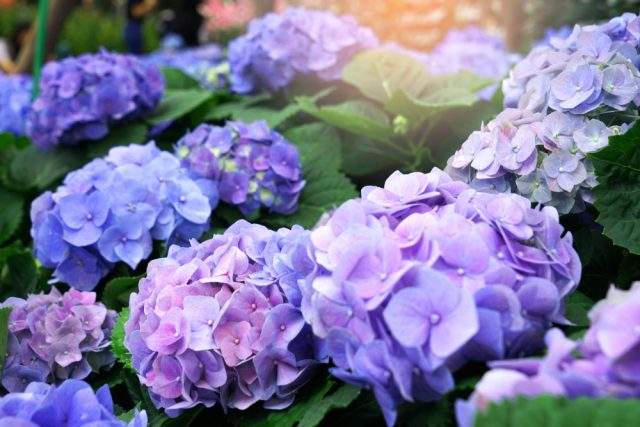 Planten Slaapkamer Baby : Gezonde kamerplanten top luchtzuiverende en kindvriendelijke