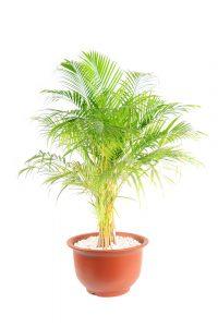 gezonde kamerplanten top 10 luchtzuiverende en kindvriendelijke planten voor binnen. Black Bedroom Furniture Sets. Home Design Ideas