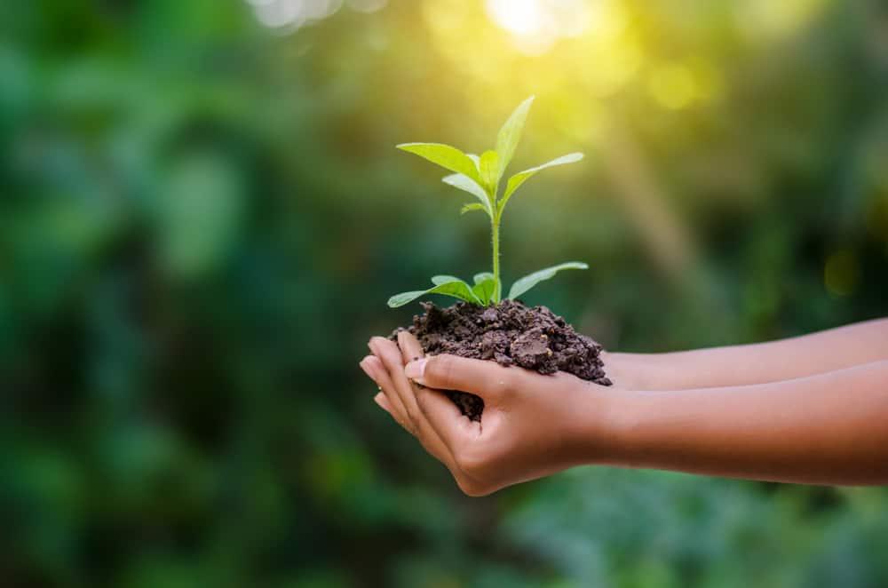 10 tips en voorbeelden voor een duurzame(re) levensstijl met kinderen - Mamaliefde.nl