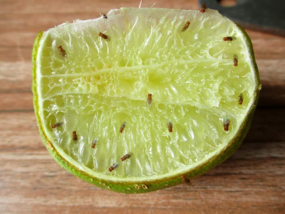 Fruitvliegjes wat te doen tips en middel om te voorkomen of verjagen van hg tot azijn - Mamaliefde.nl