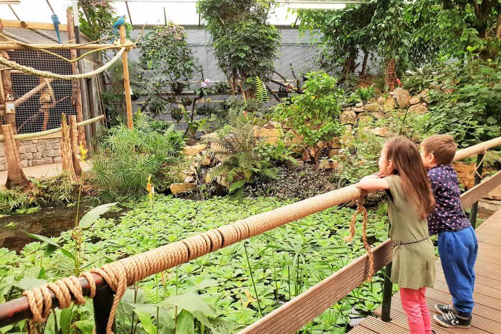 Berkenhof's Tropical Zoo; Overdekte dierentuin, vlindertuin en speeltuin - mamaliefde.nl