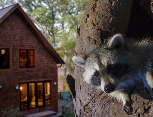 Weet jij wat er in je achtertuin leeft? Backyard Wilderness in Omniversum