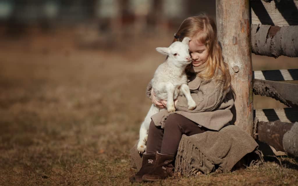 Lammetjesdagen 2020; Overzicht van de leukste open boerderijen en schaapsooien om lammetjes te aaien en knuffelen - Mamaliefde.nl