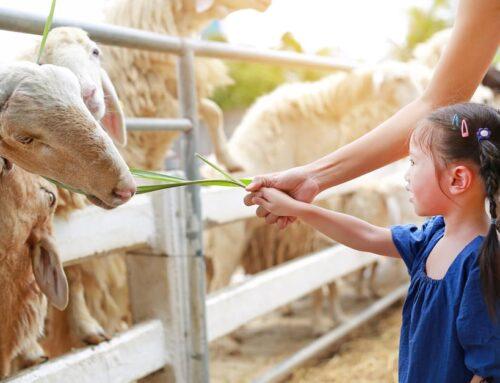 Kinderboerderij Nederland met kinderen; de leukste, grootste of met speeltuin