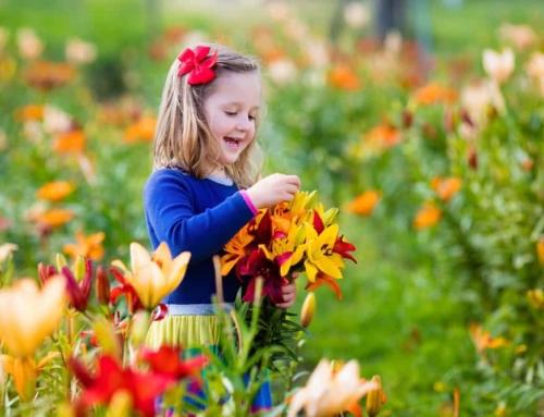 Pluktuin Nederland; overzicht waar je zelf bloemen en fruit kan plukken met je kind