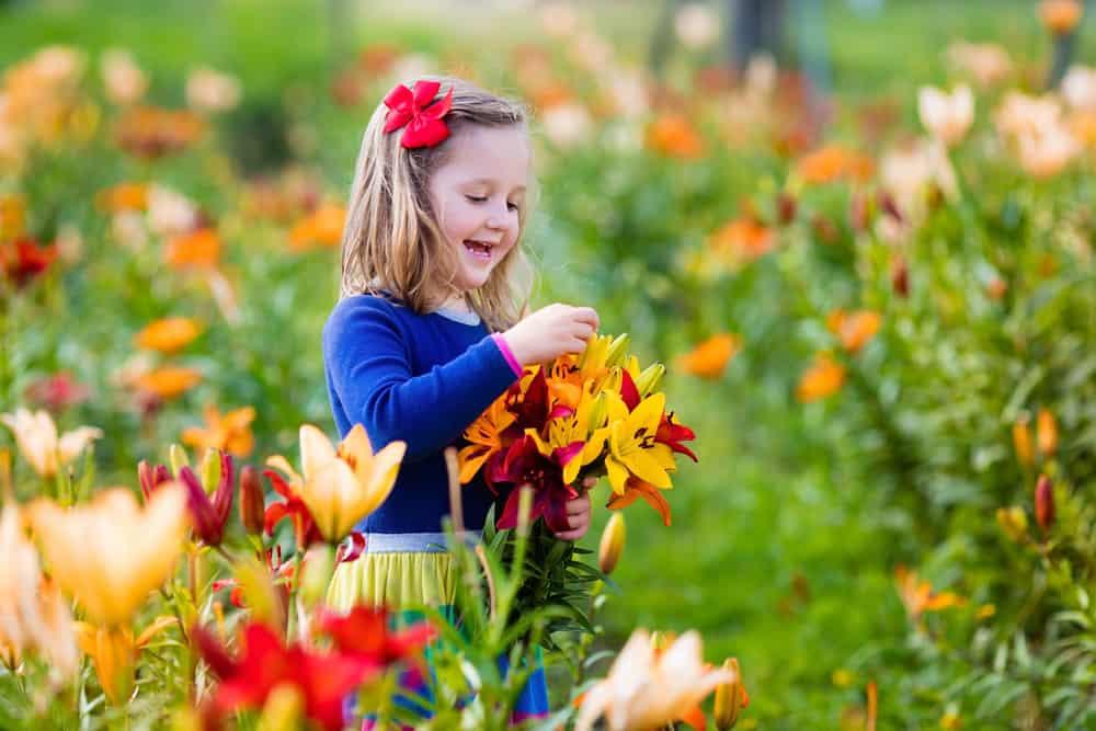 Pluktuin Nederland; lijst waar je zelf bloemen en fruit kan plukken met je kind - Mamaliefde.nl