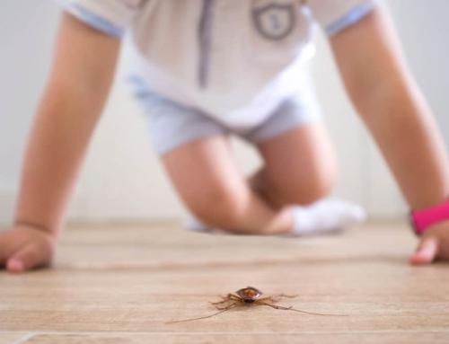 10 anti-insecten tips