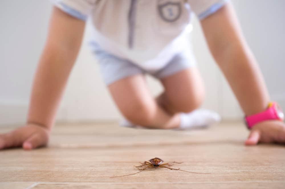Anti-insecten tips; 10 tips wat te doen van muggen tot wespen van natuurlijke middelen en spray - mamaliefde.nl