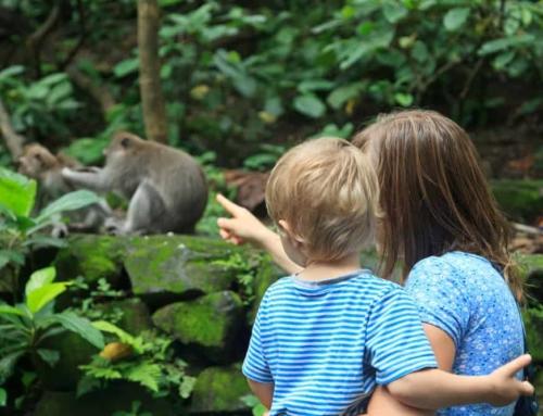 De leukste dierentuinen overdekt binnen, buiten of met speeltuin voor peuters en kleuters!