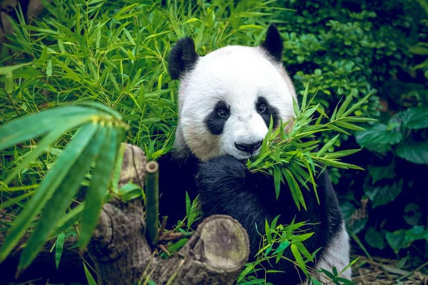Dierentuin Europa; De beste en mooiste dierentuinen met kinderen of volwassen oa de grootste of oudste dierentuinen in Frankrijk en Benelux. Met panda's of aquarium. - Mamaliefde.nl
