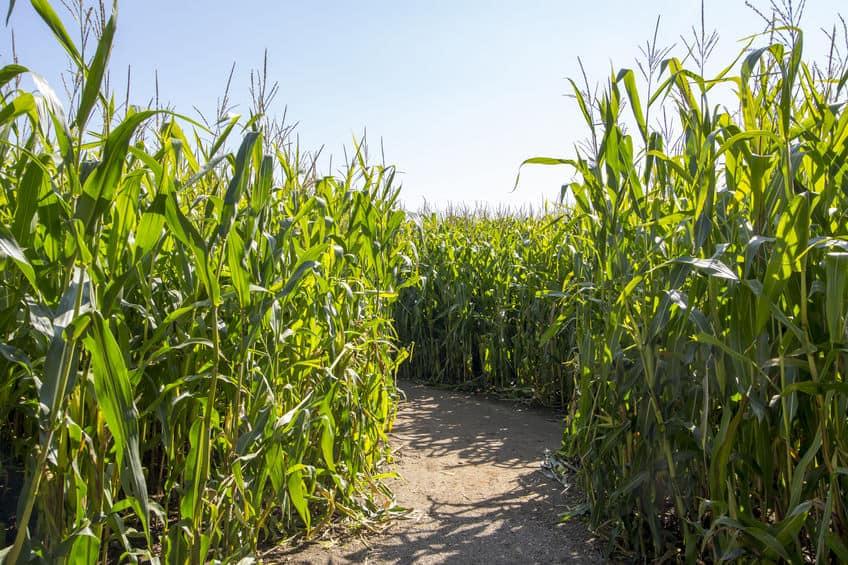 Doolhof Nederland; van grootste maisdoolhof tot labyrinth overzicht per provincie - mamaliefde.nl