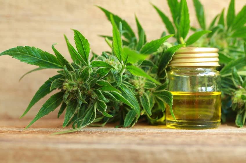 CBD-olie; Jacob Hooy beste olie, werking cannabisolie en waarvoor, ervaringen en recepten -Mamaliefde.nl