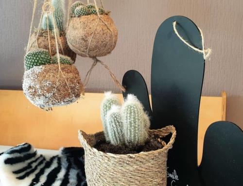 De cactus; de ideale plant voor als je geen groene vingers hebt.