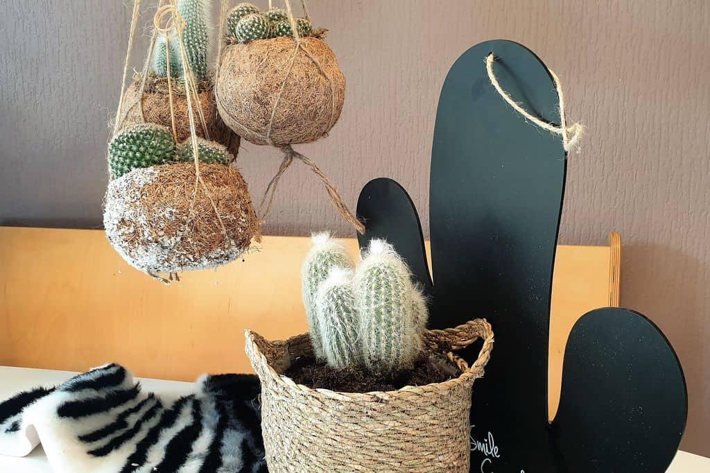 Cactus als woonkamerplant zonder groene vingers; inclusief tips voor verzorging en pokon voeding - Mamaliefde.nl