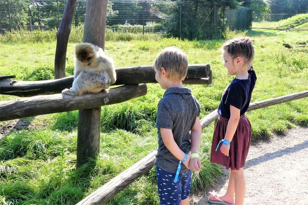 Review safaripark Givskud Zoo; ervaringen van de leukste dierentuin van Denemarken met kinderen - Mamaliefde.nl