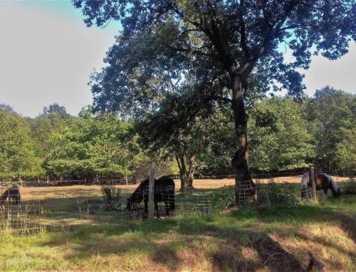 Vakantie bij Camping Landclub Ruinen Drenthe