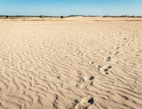 Natuurlijke 'zandbakken' in Nederland; van duinen tot zandverstuiving en 'woestijn'