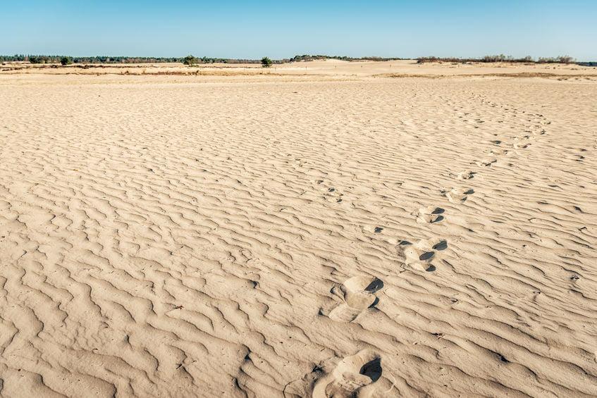 Woestijn en zandvlakte Nederland; de mooiste stuifzandgebieden, zandverstuiving en duinen - Mamaliefde.nl