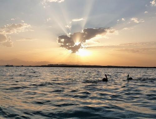 Snorkelen met kinderen; praktische tips en ervaringen