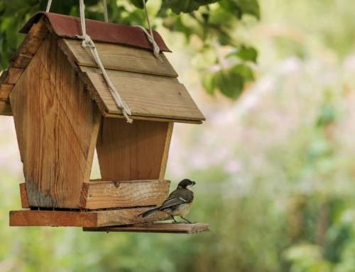 Zelf vogelvoer maken; van vetbollen met of zonder frituurvet tot slingers en vogeltaart knutselen