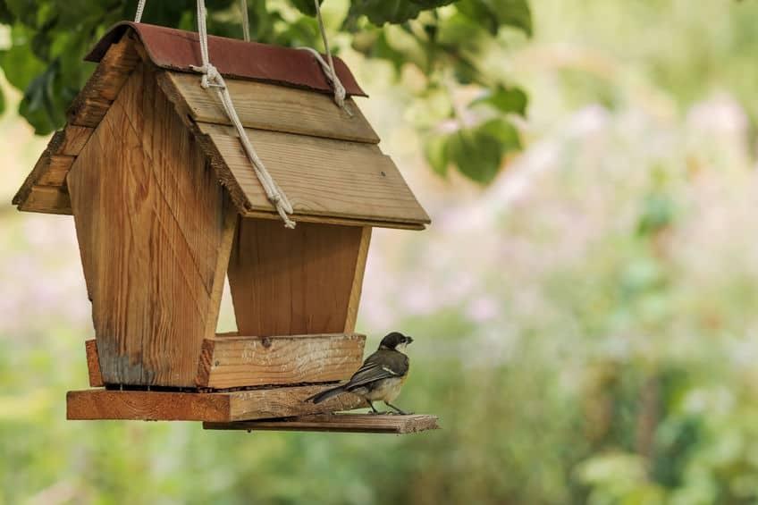 Zelf vogelvoer maken; van vetbollen met of zonder frituurvet tot slingers en vogeltaart knutselen - Mamaliefde.nl