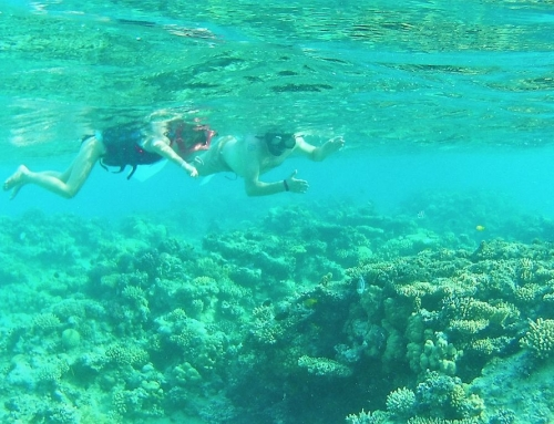 Waar kan je snorkelen?