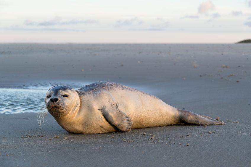 EcoMare Texel; Natuurcentrum met zeehondenopvang in de duinen in de Koog. Ideaal voor combinatie met wandeling door de duinen. - mamaliefde.nl