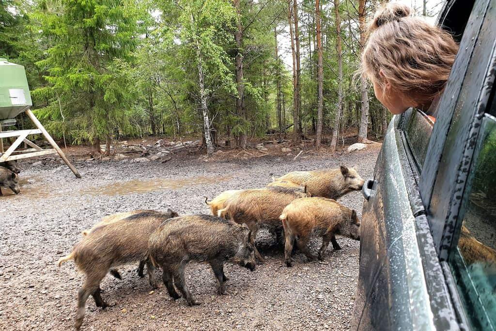 Op Safari in Kosta, Zweden - Mamaliefde.nl