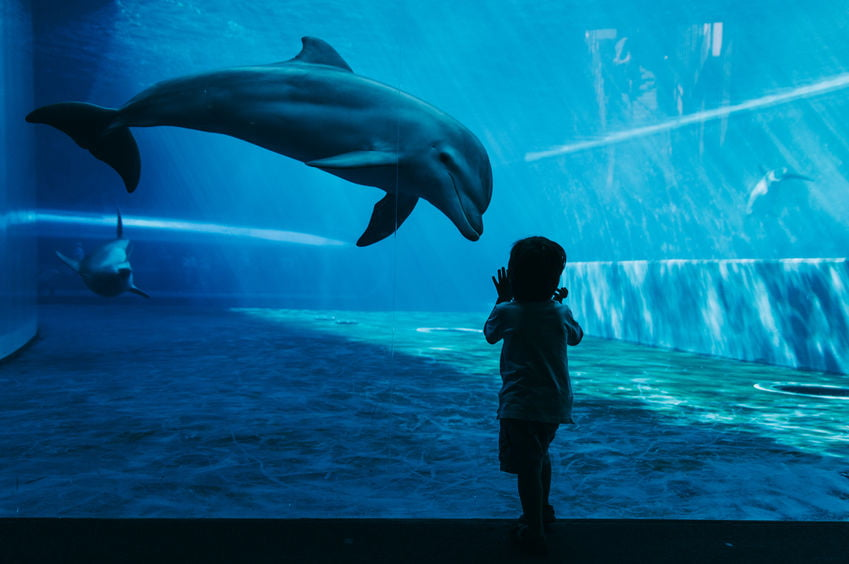 Wat is Dolphin Parenting? - Mamaliefde.nl