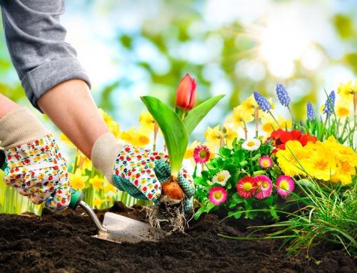 10 tips om de tuin in de lente zomerklaar te maken