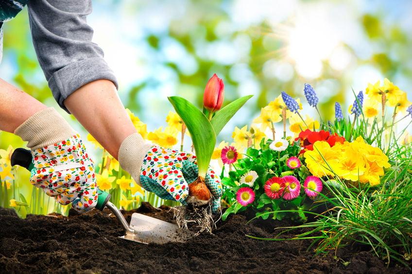 10 tips om de tuin in de lente zomerklaar te maken - Mamaliefde.nl